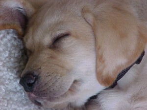 puppy Reagan