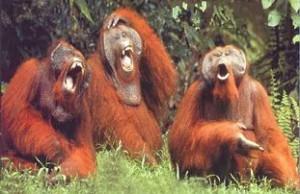 monkeys-laughing